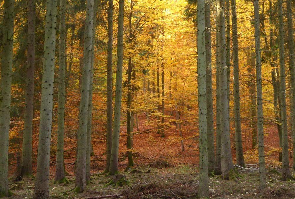Melsunger Stadtwald