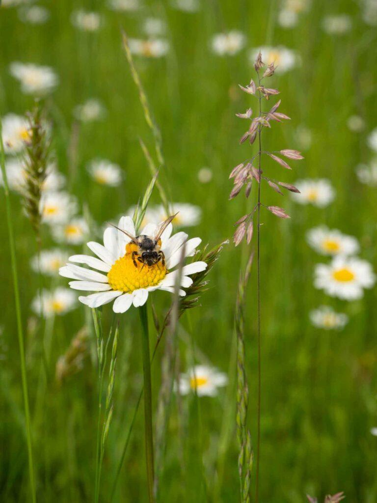 Bienenfreundliches-Melsungen